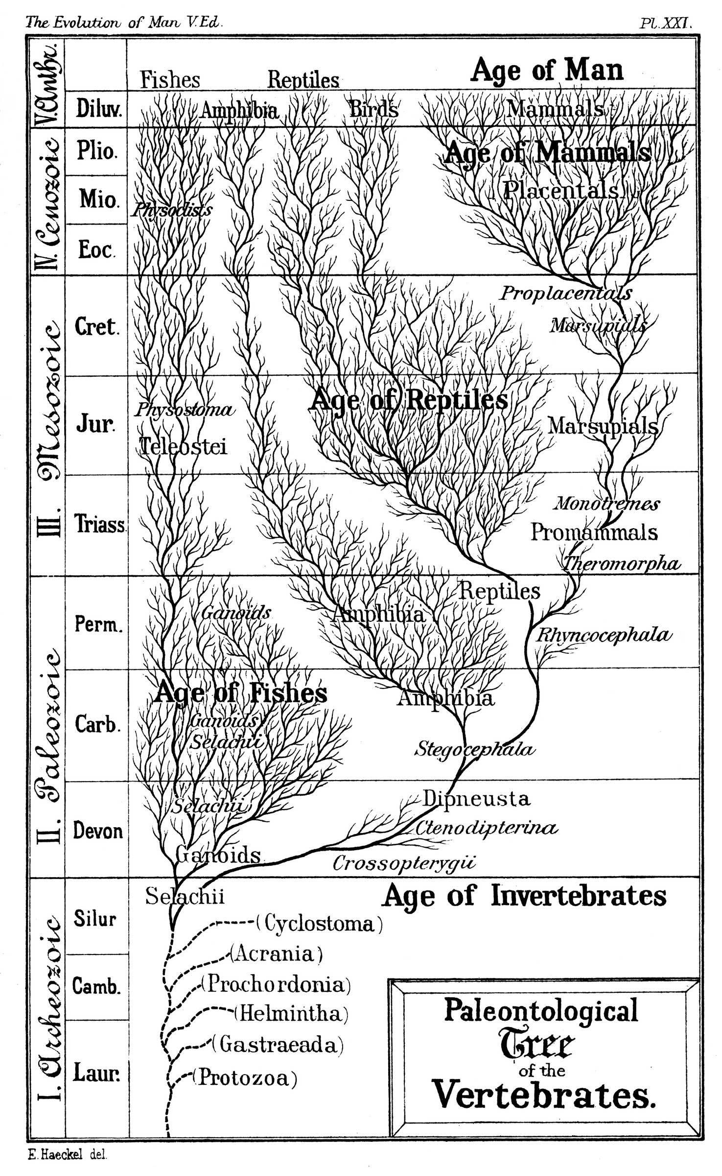 Evidence Of Evolution Worksheet Answers Classified Ficial Evidence Evolution Worksheet Answers