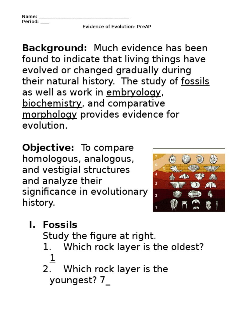 Evidence Of Evolution Worksheet Answers Evidence Of Evolution Worksheet Murch 2013answers