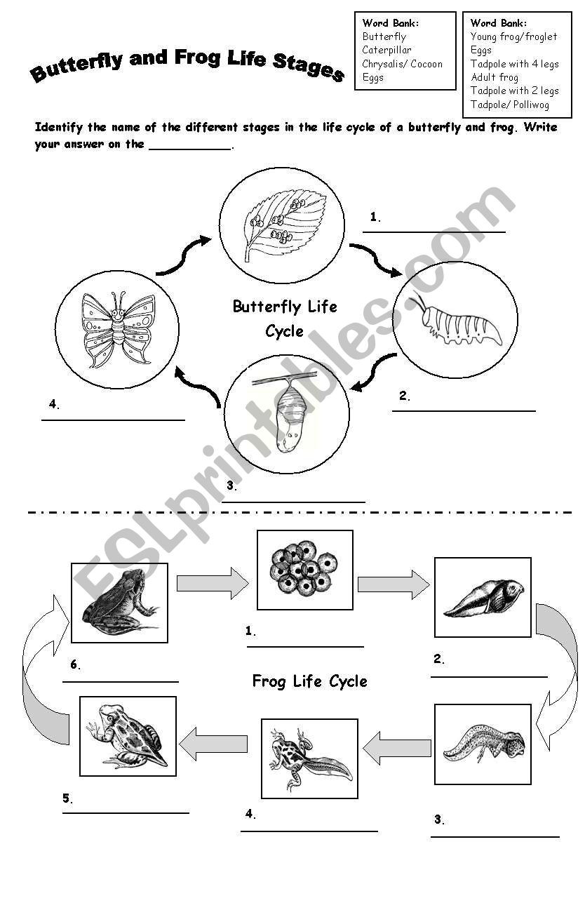 Frog Life Cycle Worksheet Frog and butterfly Life Cycle Esl Worksheet by