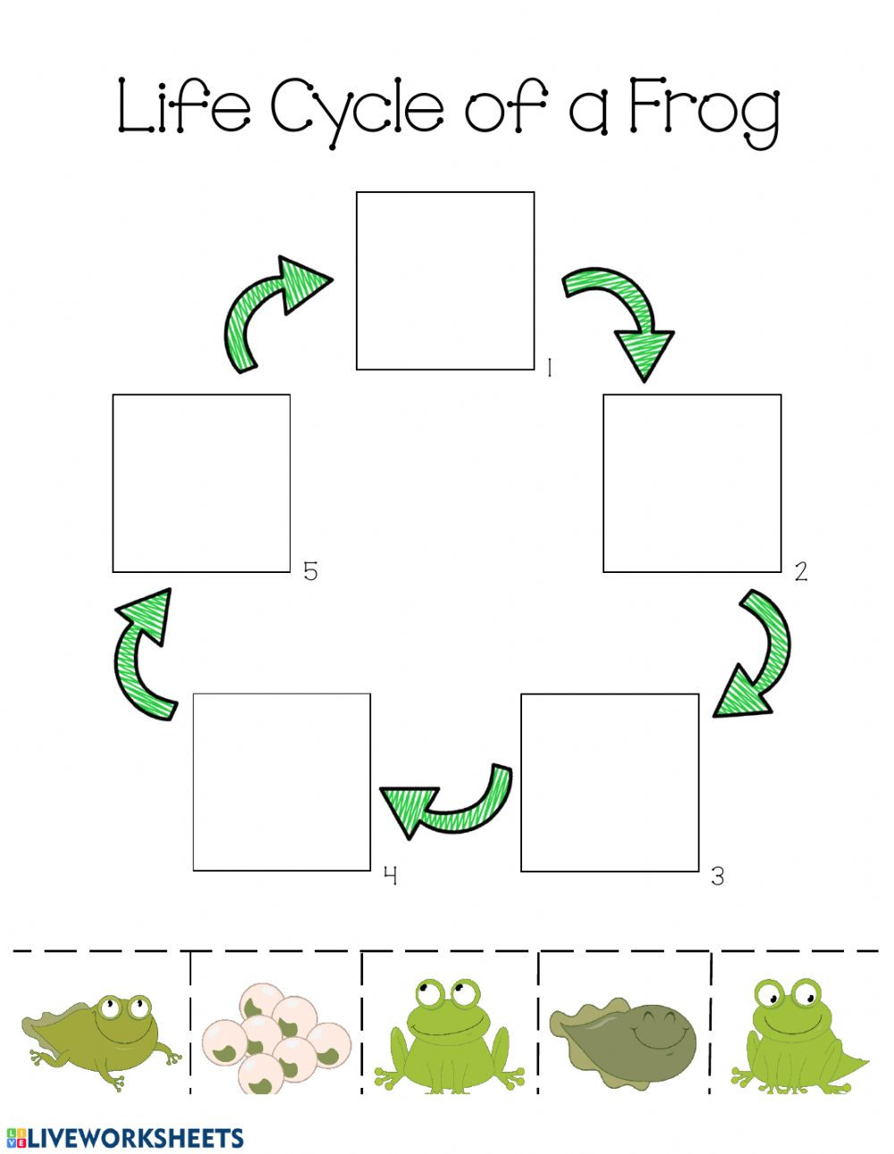 Frog Life Cycle Worksheet Life Cycle Of A Frog Life Cycle Worksheet