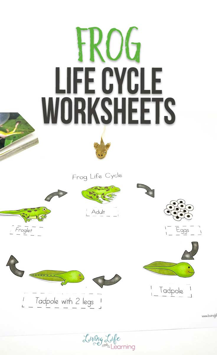 Frog Life Cycle Worksheet Super Fun Frog Life Cycle Worksheets to Help Teach Stages