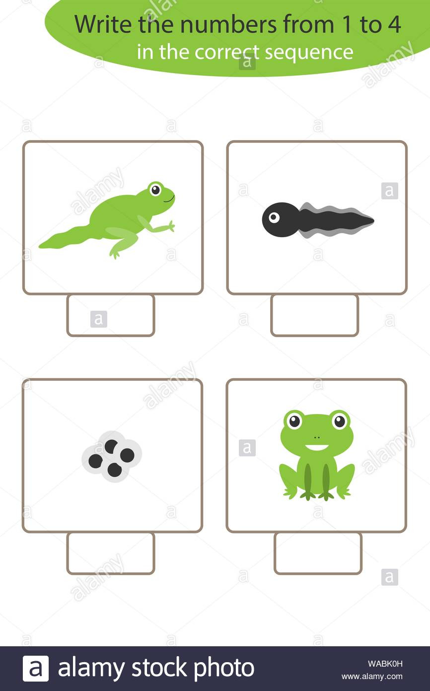 Frog Life Cycle Worksheet Visual Game with Frog Life Cycle for Kids Educational Task