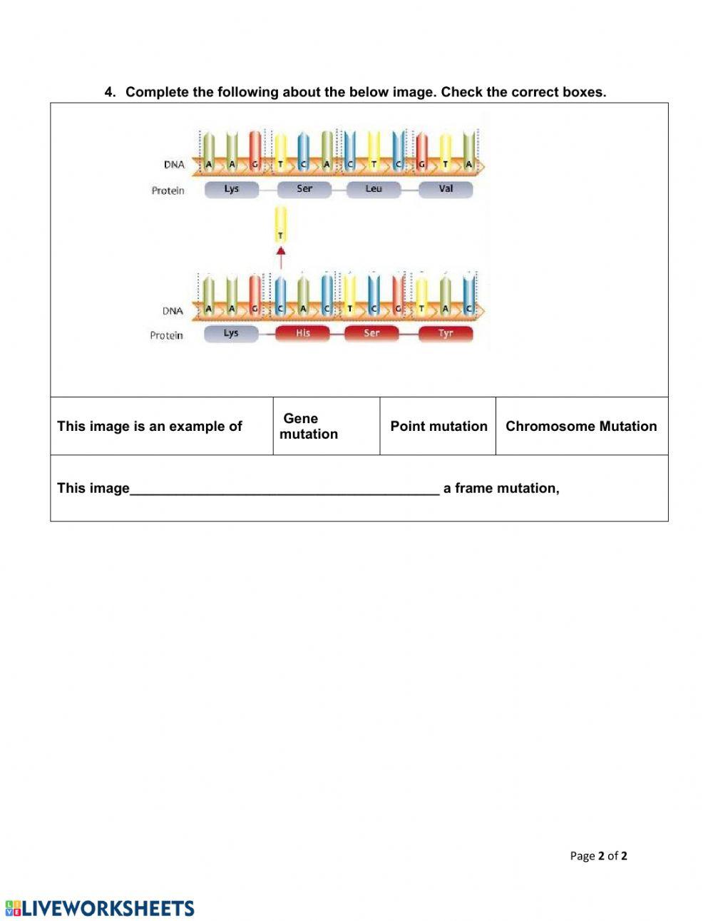 Gene and Chromosome Mutation Worksheet Ch13 3 Mutation Interactive Worksheet