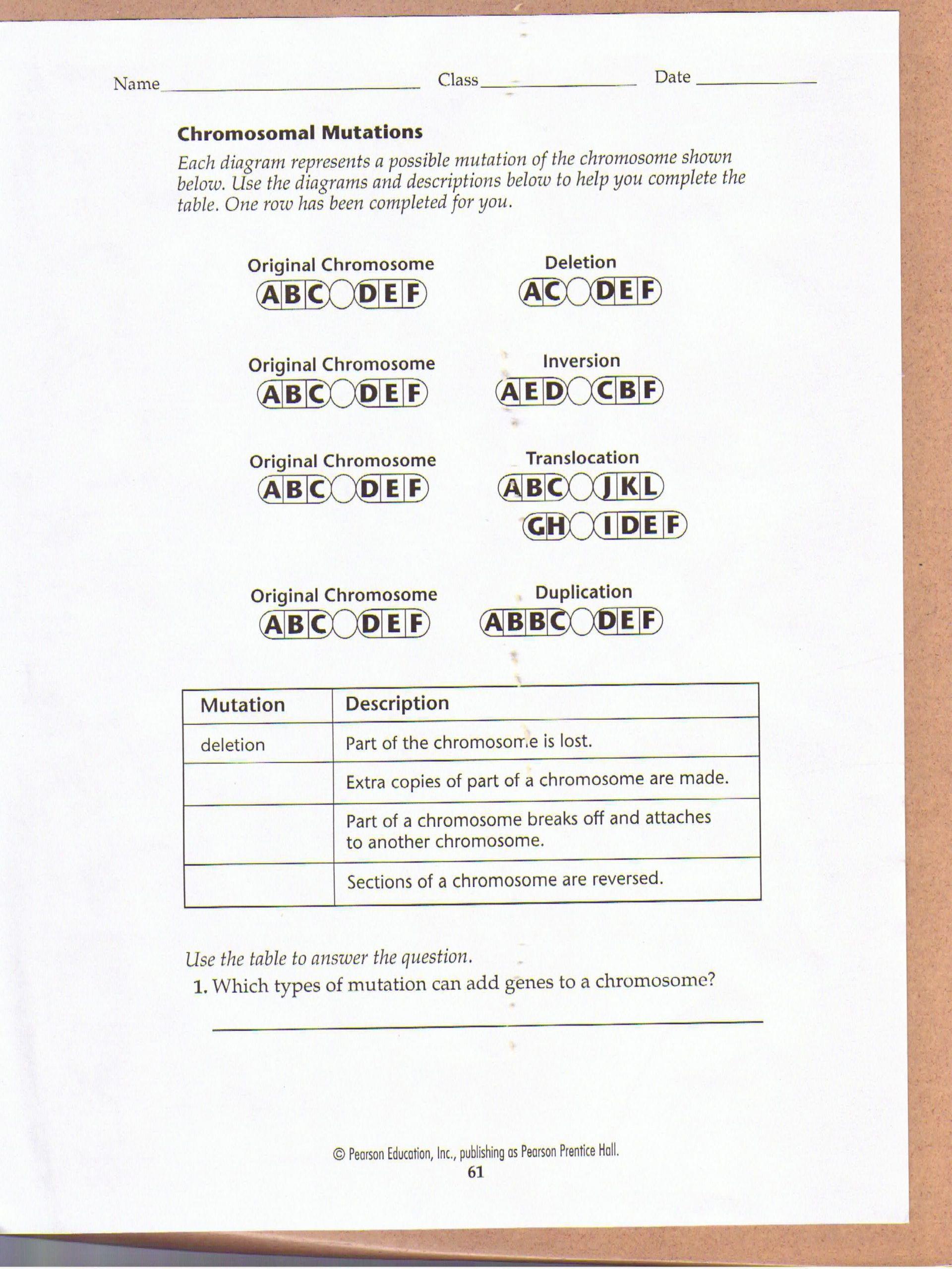 Gene and Chromosome Mutation Worksheet Chromosomal Mutations Worksheet