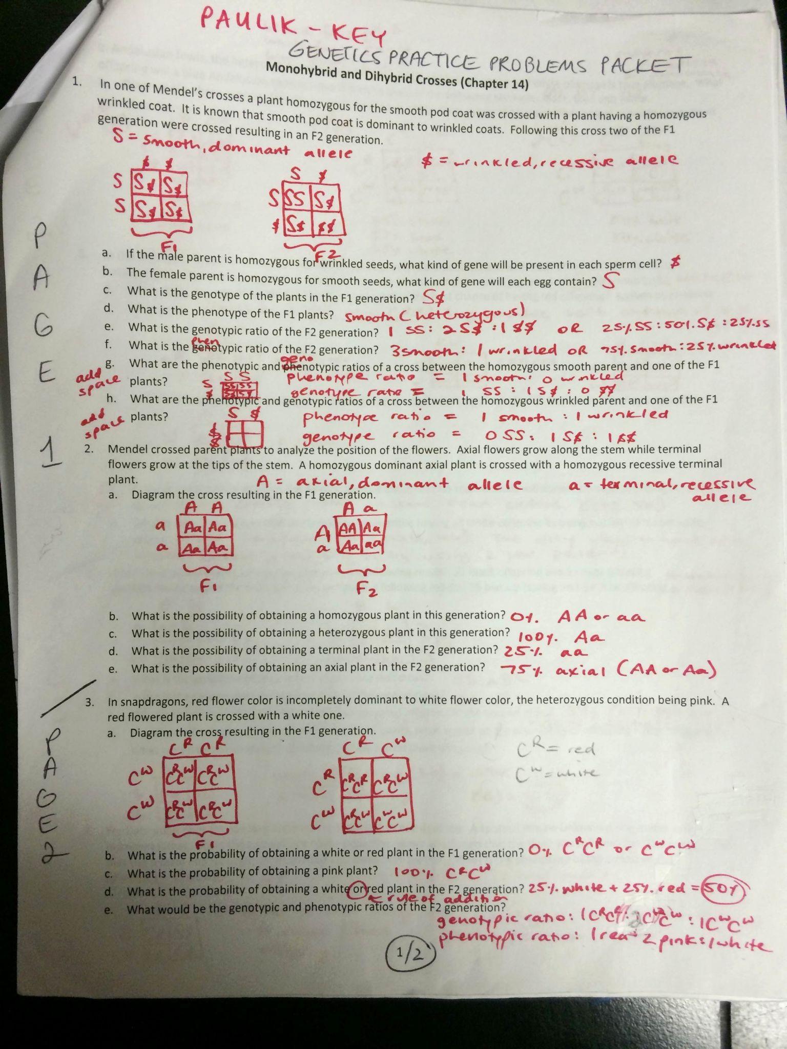 Genetics Practice Problems Worksheet 35 Punnett Square Practice Problems Worksheet Answers
