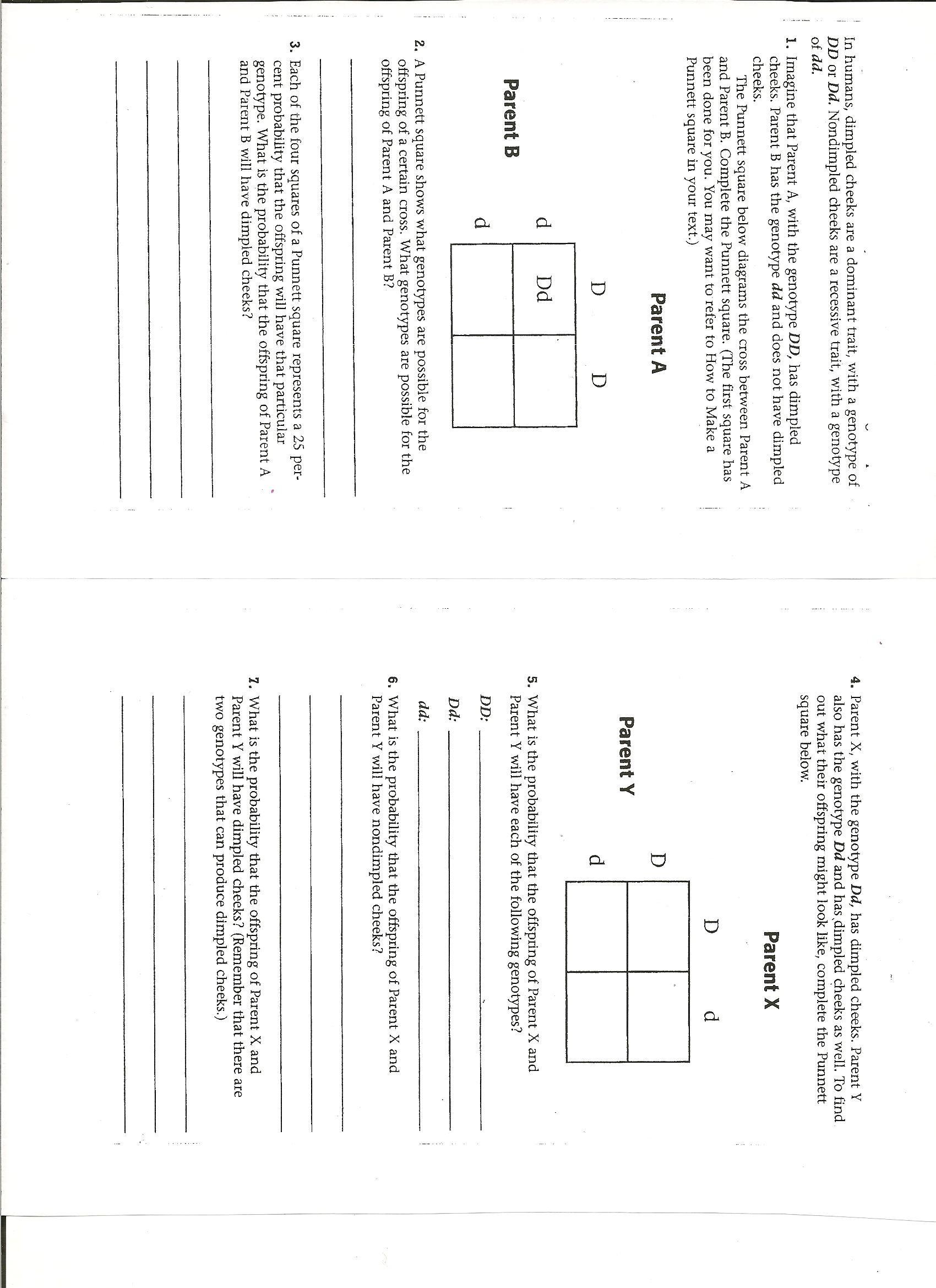 Genetics Practice Problems Worksheet Answers Worksheet Punnett Square Practice Worksheet Hunterhq Free
