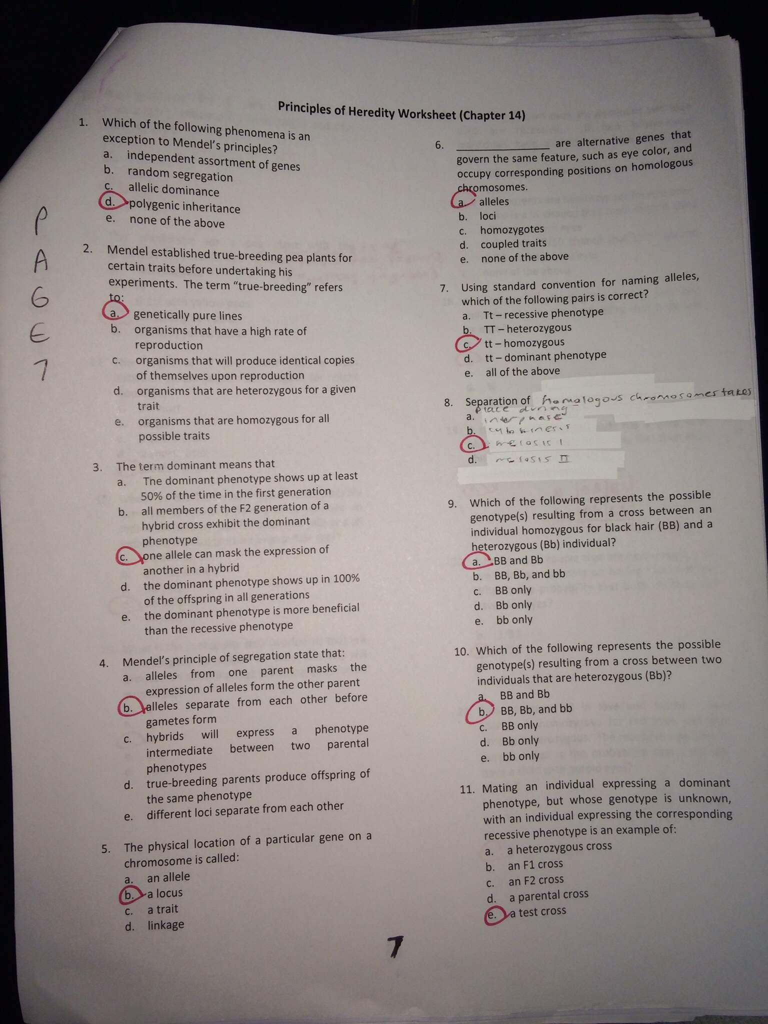 Genetics Practice Problems Worksheet Key Genetics Practice Problems Packet P 6 16 Mrs