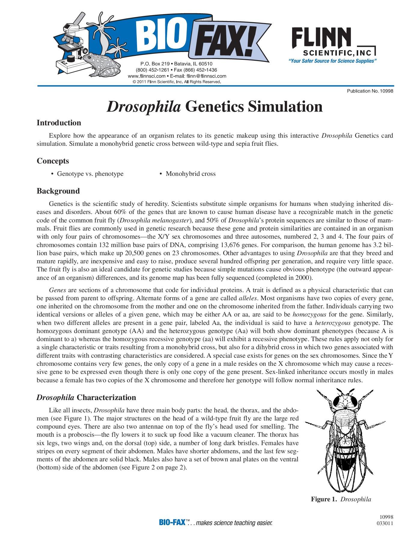Genetics X Linked Genes Worksheet Drosophila Genetics Simulation Flinn Scientific Pages 1