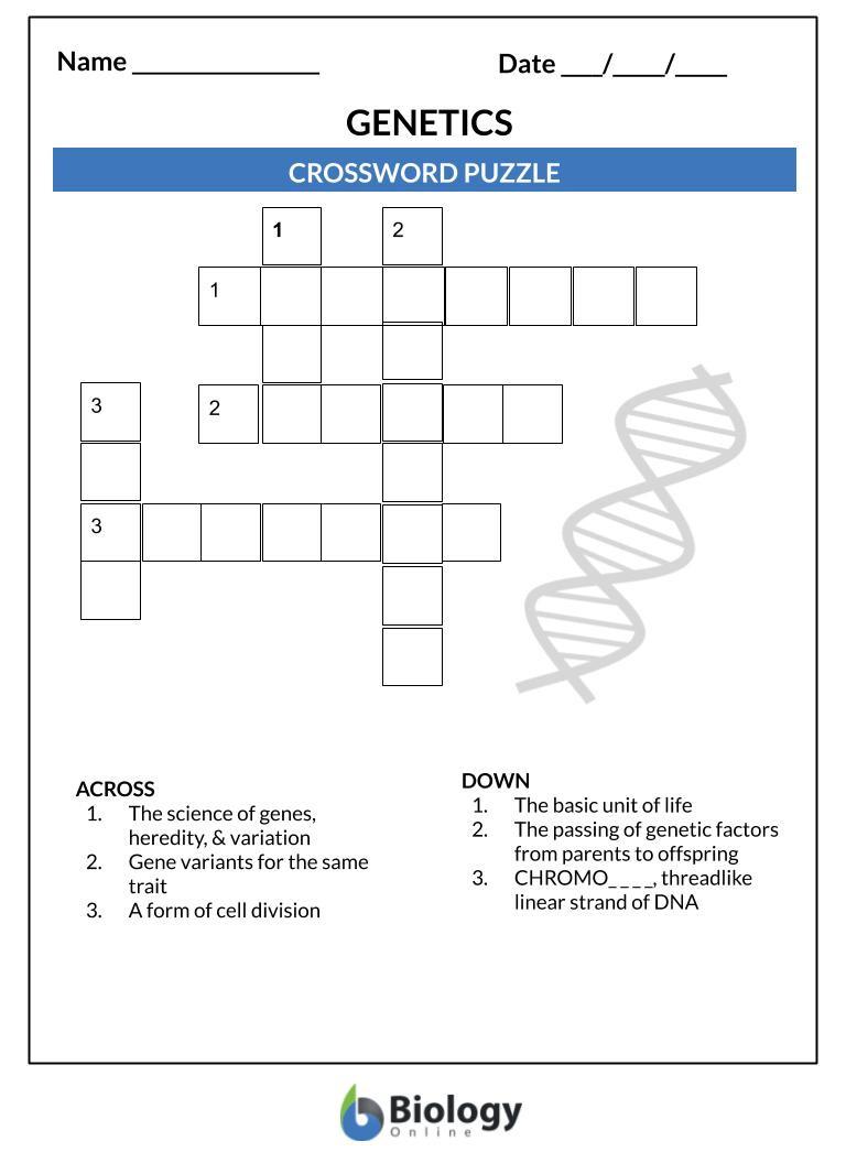Genetics X Linked Genes Worksheet Genetics Lesson Outline & Worksheets Biology Line Tutorial