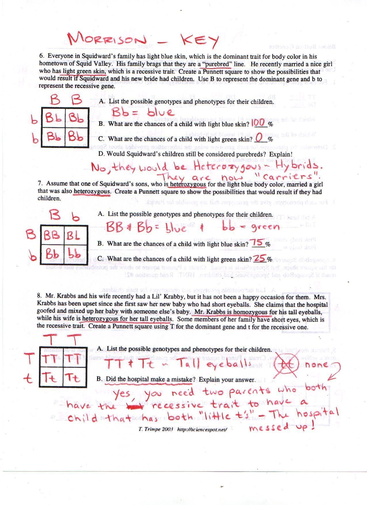 Genotypes and Phenotypes Worksheet Answers Pin On Printable Blank Worksheet Template