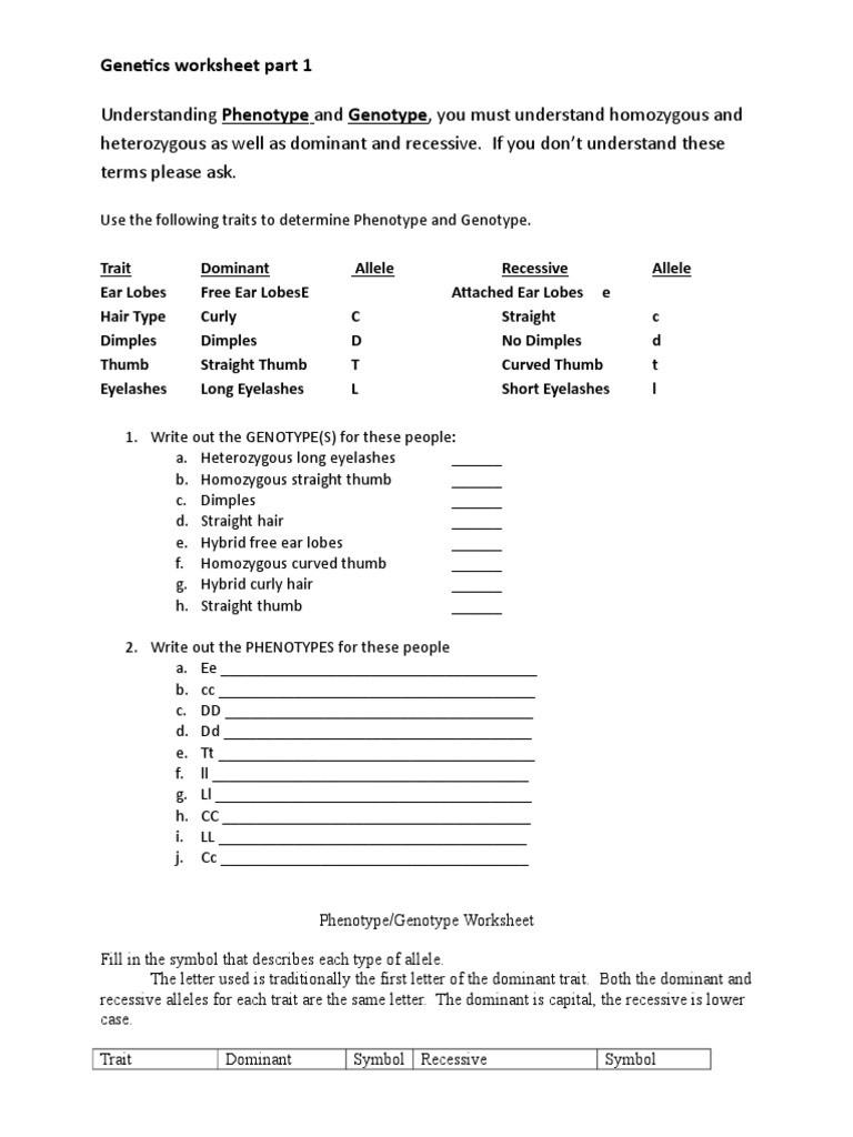 Genotypes and Phenotypes Worksheet Genotype Phenotype Worksheet Dominance Genetics