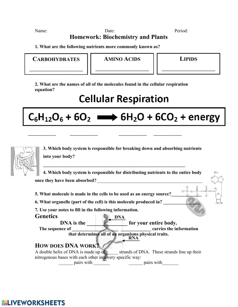 Lipids Worksheet Answer Key Ipc Biochemistry & Plants Interactive Worksheet