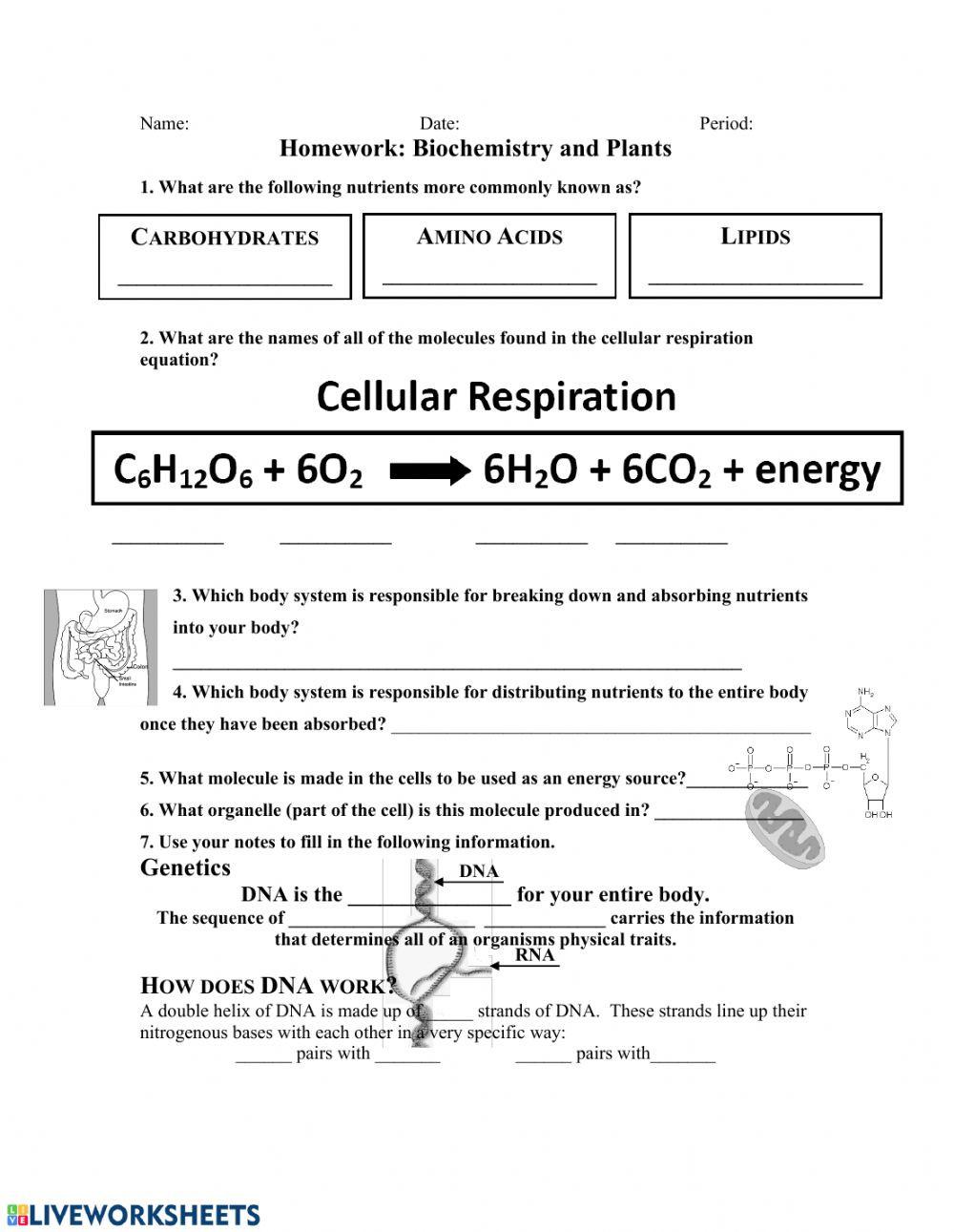 Lipids Worksheet Answer Key Ipc Biochemistry & Plants Interactive Worksheet