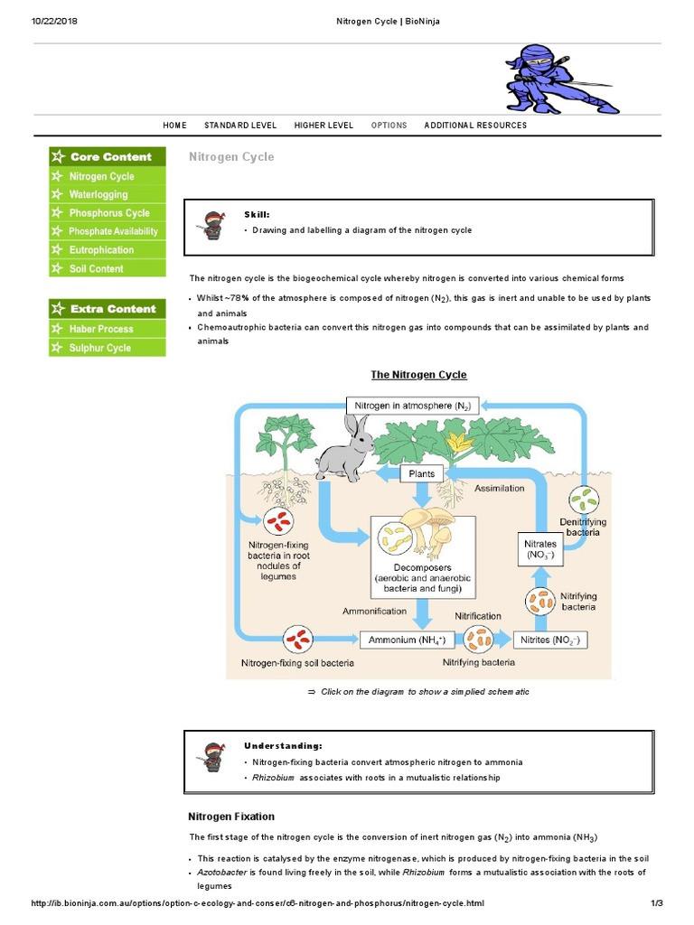 Nitrogen Cycle Worksheet Answer Key Nitrogen Cycle Bioninja Industrial Gases