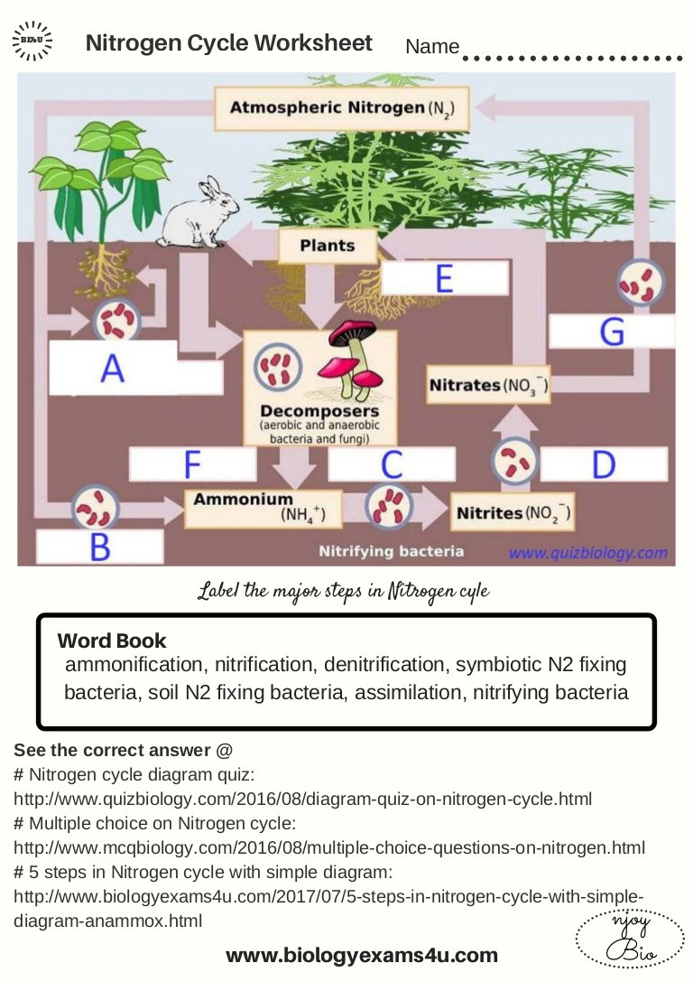 Nitrogen Cycle Worksheet Answer Key the Nitrogen Cycle Worksheet