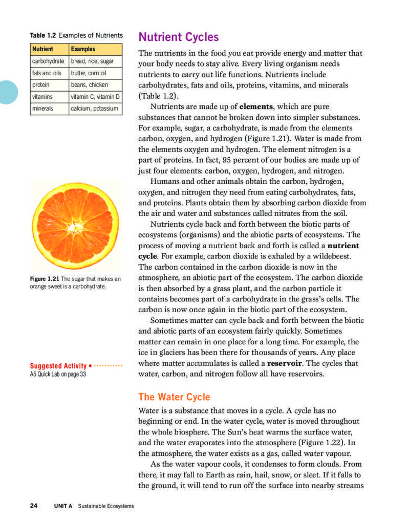 Nutrient Cycles Worksheet Answers Nutrient Cycles and Energy Flows Through Ecosystems Pages