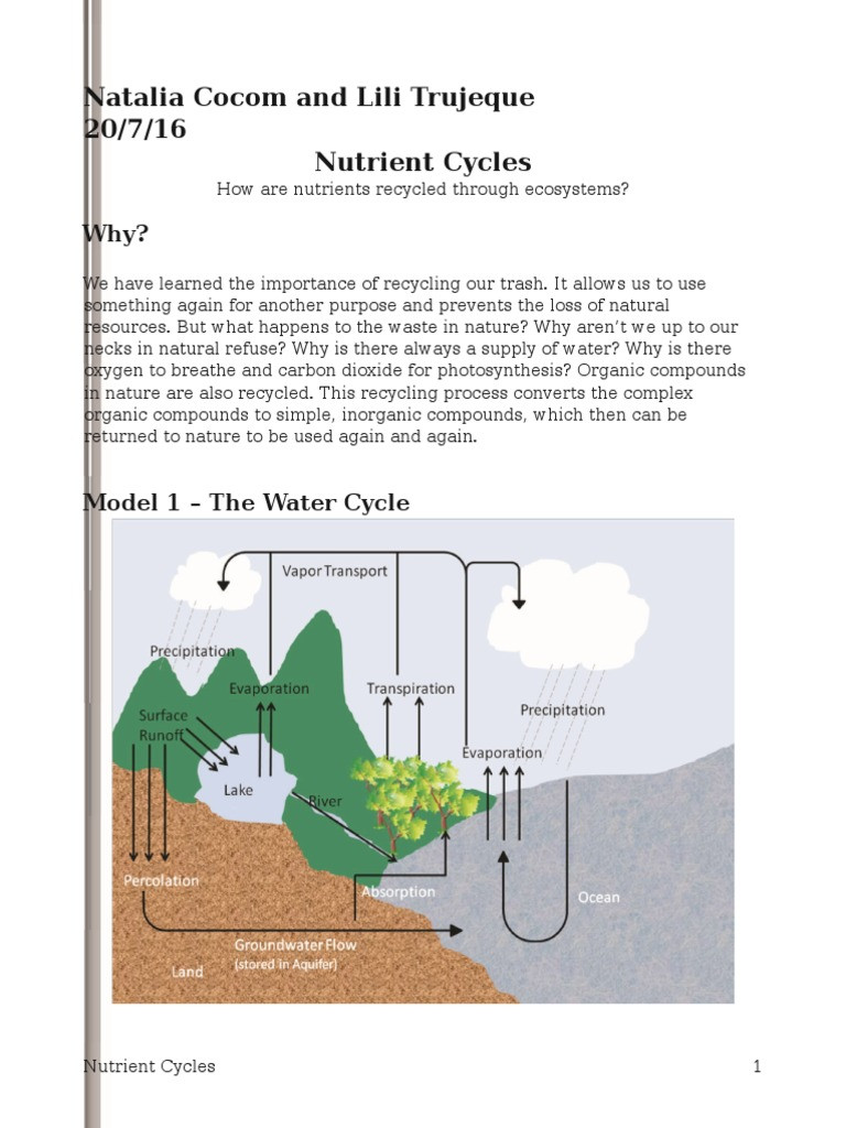 Nutrient Cycles Worksheet Answers Nutrient Cycles Pogil Natalia
