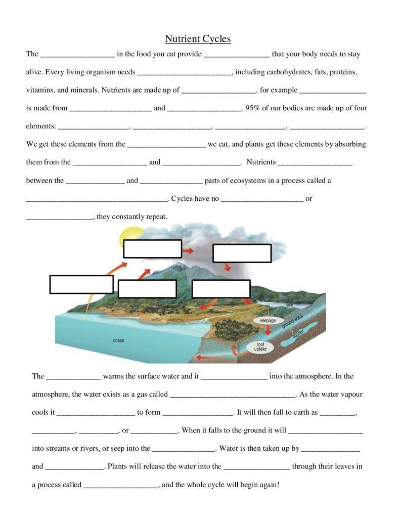 Nutrient Cycles Worksheet Answers Nutrient Cycles Worksheet