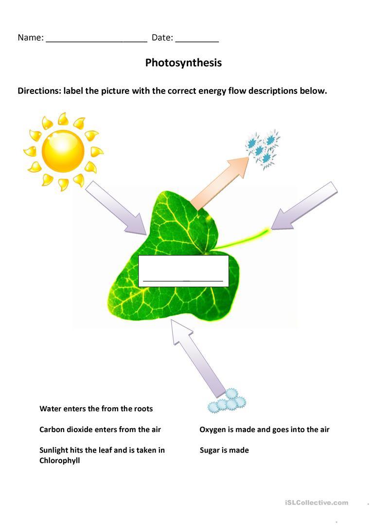 Photosynthesis Worksheet High School English Esl Photosynthesis Worksheets Most Ed 3