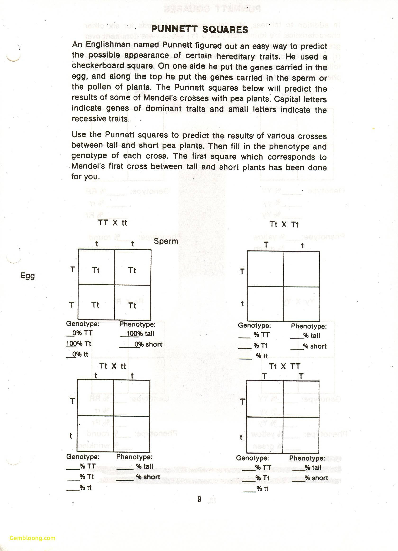 Photosynthesis Worksheet High School High School Biology Synthesis Worksheets