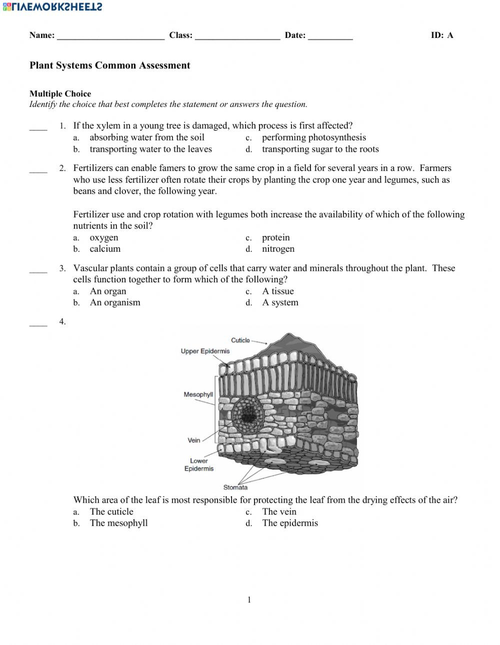 Photosynthesis Worksheet High School Plant Systems Test Interactive Worksheet