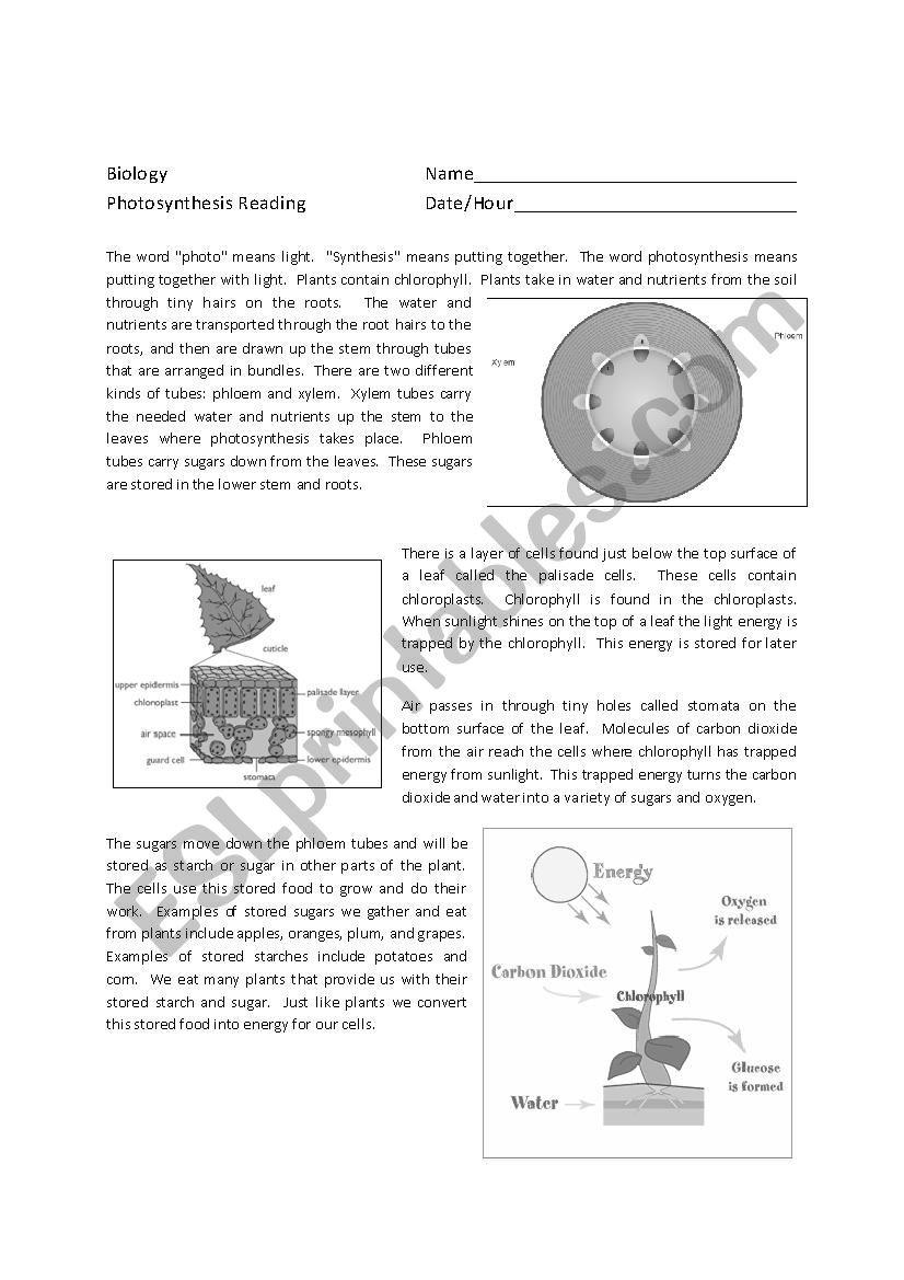 Photosynthesis Worksheet High School Synthesis Reading Prehension Esl Worksheet by Brileyhc