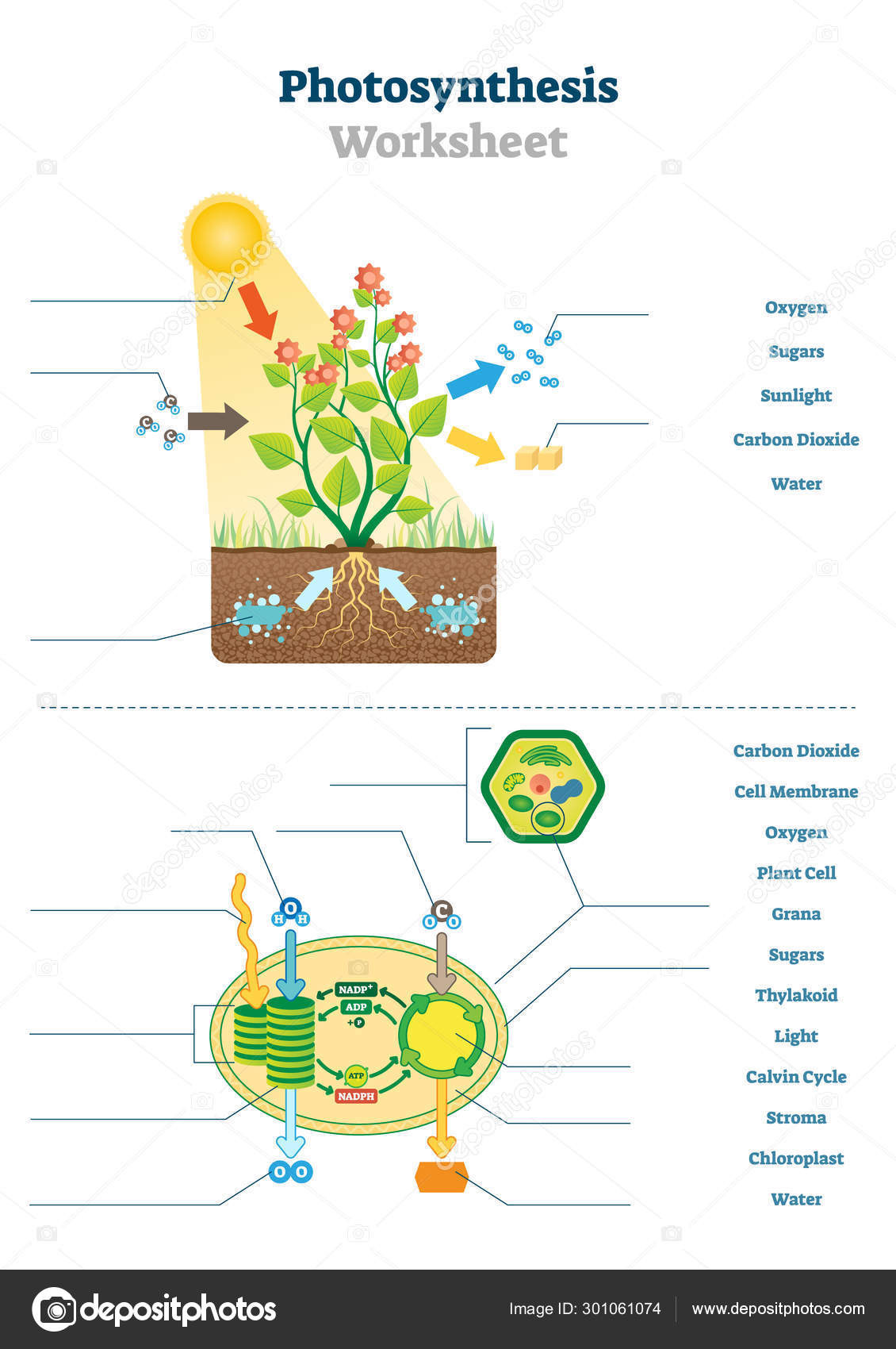 Photosynthesis Worksheet High School Synthesis Worksheet Vector Illustration Blank Oxygen Process Template