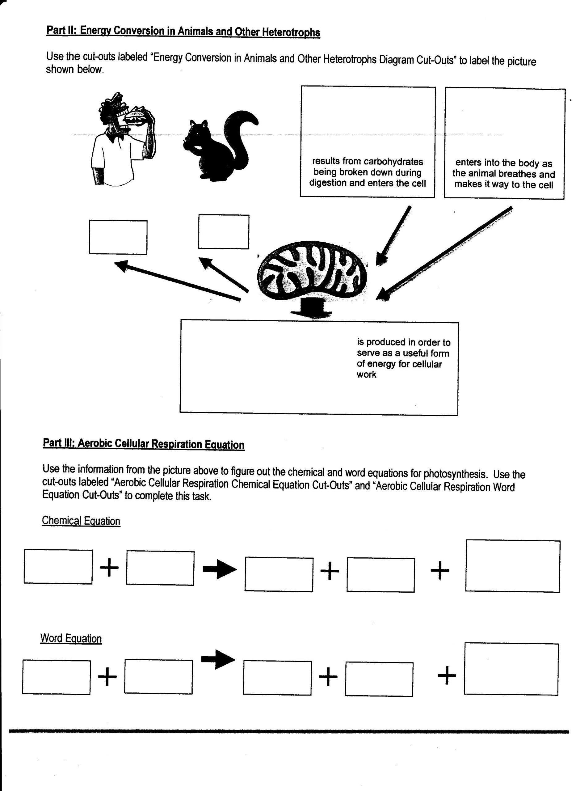 Photosynthesis Worksheet High School Week 15 Synthesis and Respiration