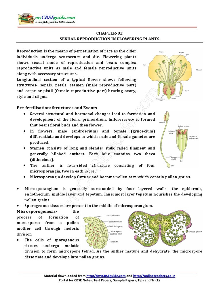 Plant Reproduction Worksheet Answers 12 Biology Notes Ch02 Ual Reproduction In Flowering
