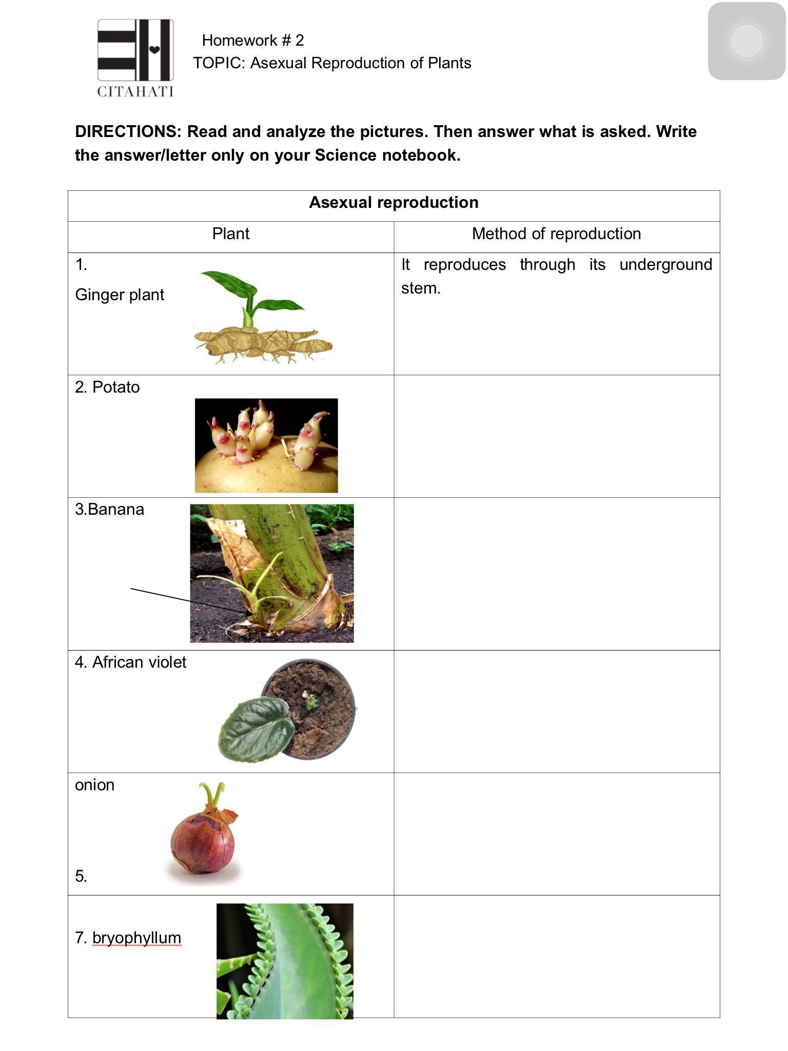 Plant Reproduction Worksheet Answers Pin On Worksheet Templates for Student
