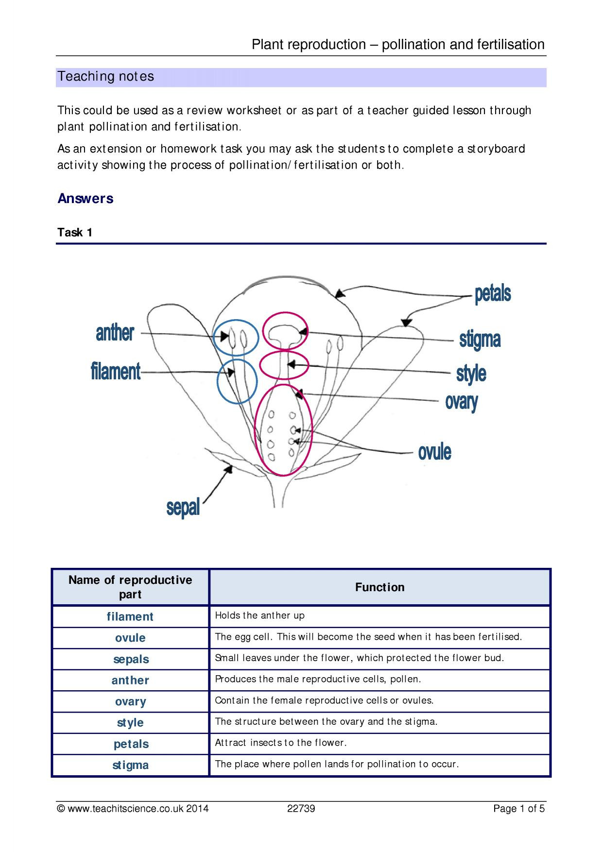 Plant Reproduction Worksheet Answers Plant Reproduction Pollination and Fertilisation – Teachit