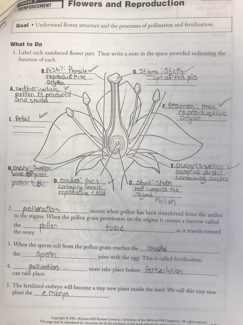 Plant Reproduction Worksheet Answers topic 3 Reproduction Mrs Bohaychuk S Information Station