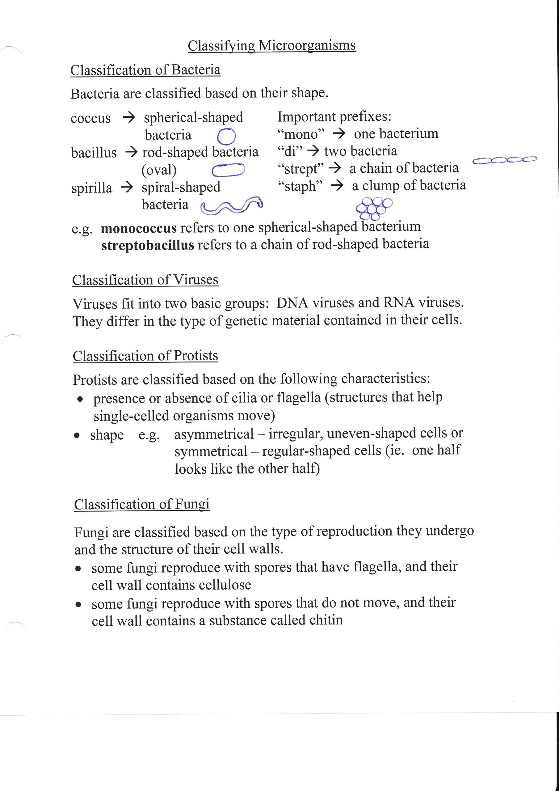 Prokaryotes Bacteria Worksheet Answers 31 Chapter 18 Viruses and Bacteria Worksheet Answer Key