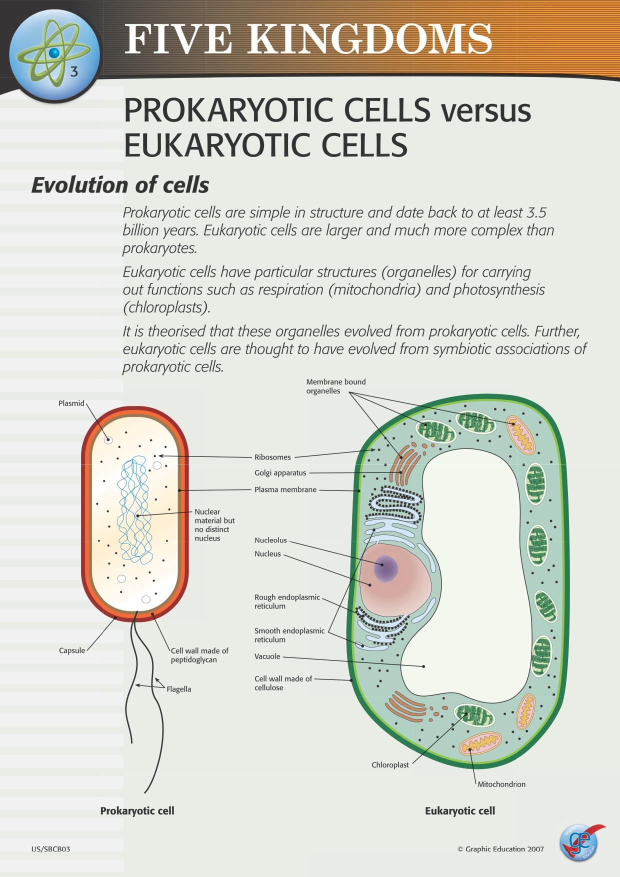 Prokaryotes Vs Eukaryotes Worksheet Prokaryotic and Eukaryotic Worksheet