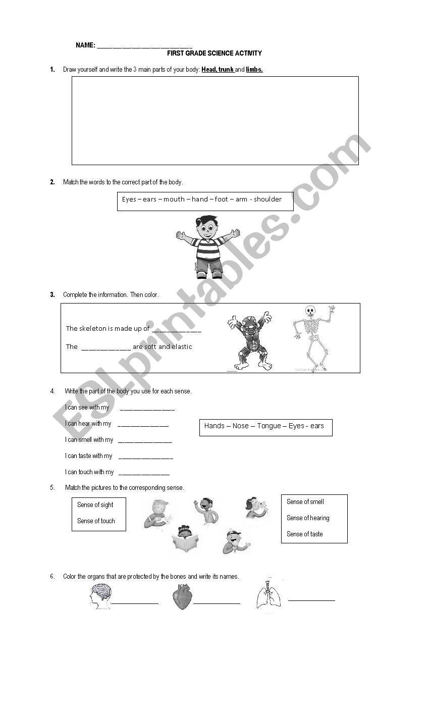 Science Worksheet for 1st Grade First Grade Science Worksheet Esl by Anpamaji Worksheets