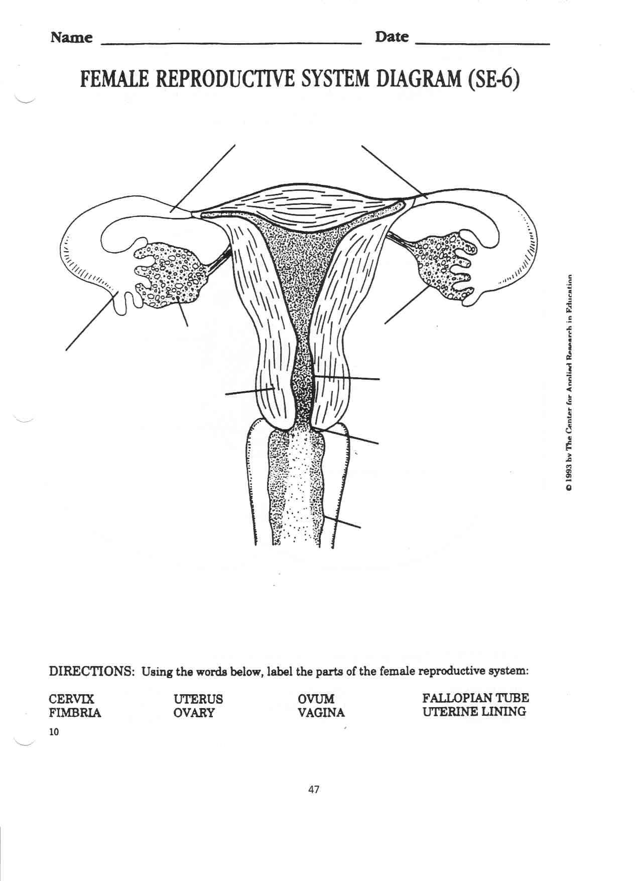 The Female Reproductive System Worksheet Female Reproductive System Internal 1 275—1 754 Pixels