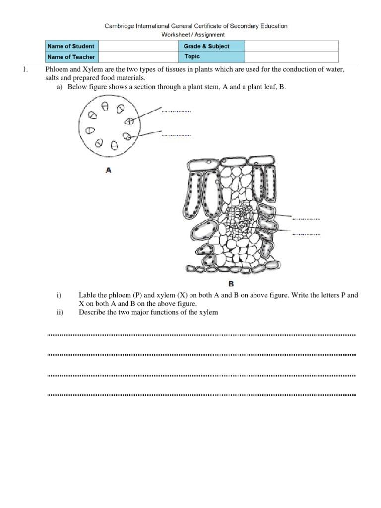 Transport In Cells Worksheet 31 Transport In Plants Worksheet Worksheet Resource Plans