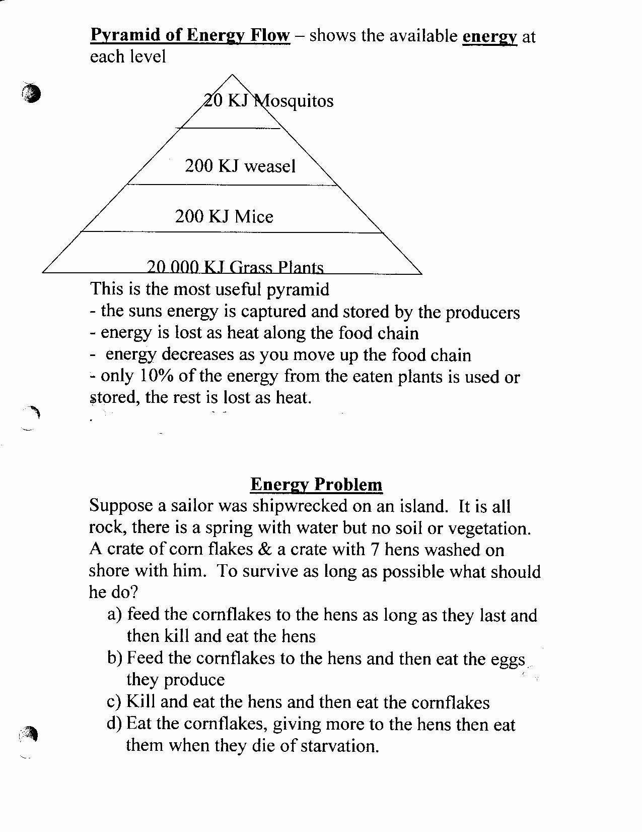 Bill Nye Food Web Worksheet Bill Nye the Science Guy Food Web Worksheet