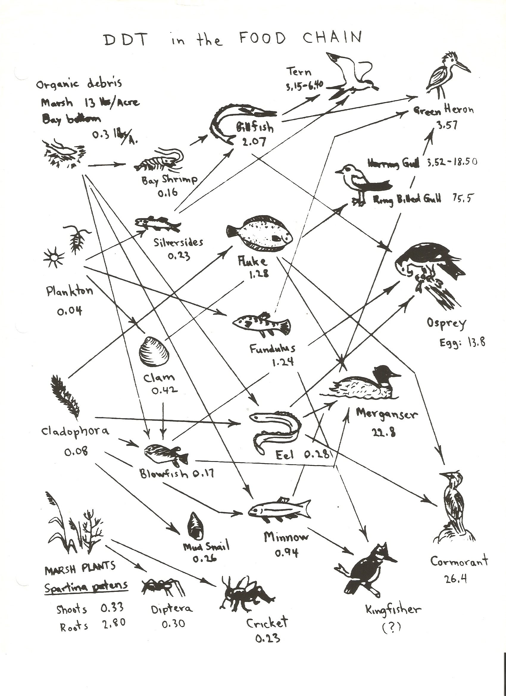 Bill Nye Food Web Worksheet Wel E to the Web Worksheet Answers