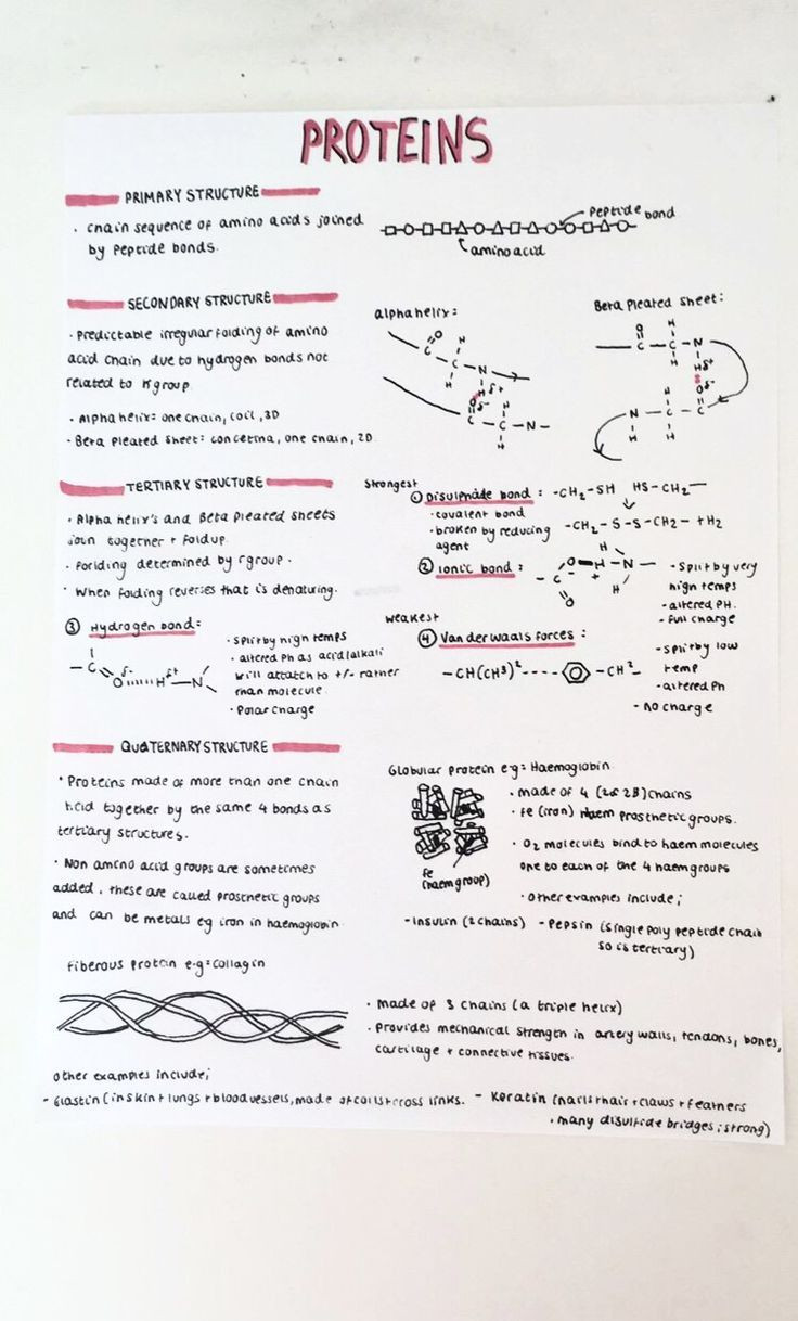 Biological Molecules Worksheet Answers A Level Biology Notes Proteins