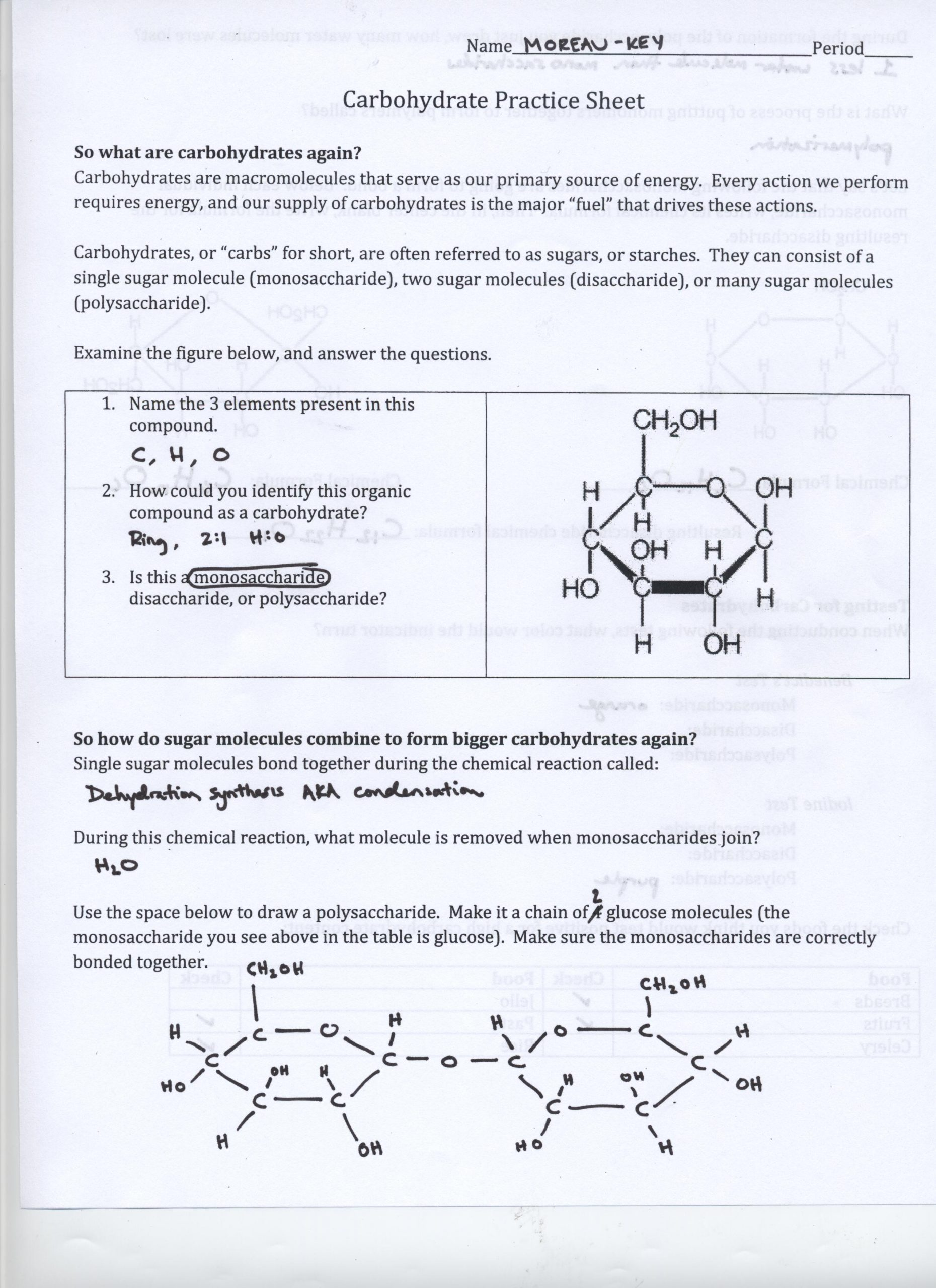 Biological Molecules Worksheet Answers Biological Molecules Worksheet