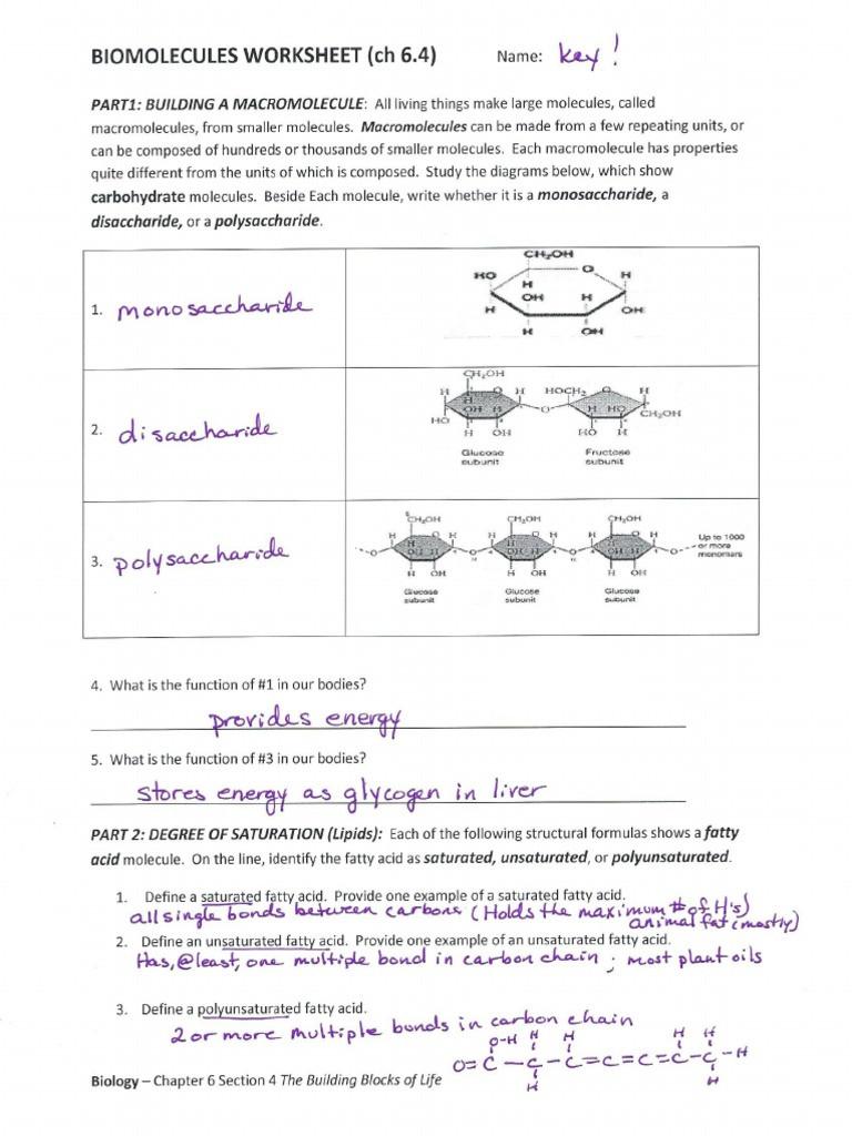 Biological Molecules Worksheet Answers Biomolecules Pkt Key Worksheet Pdf