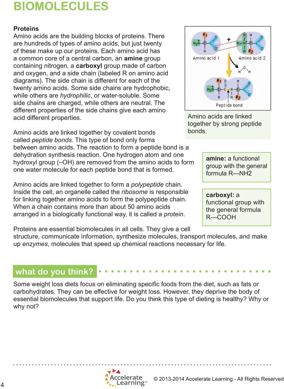 Biological Molecules Worksheet Answers Biomolecules Reflect Pdf Free Download
