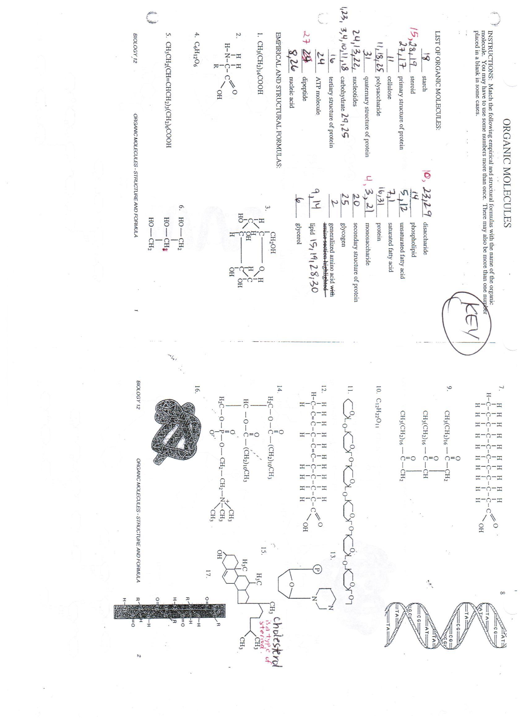 Biological Molecules Worksheet Answers Biomolecules Worksheet Answers