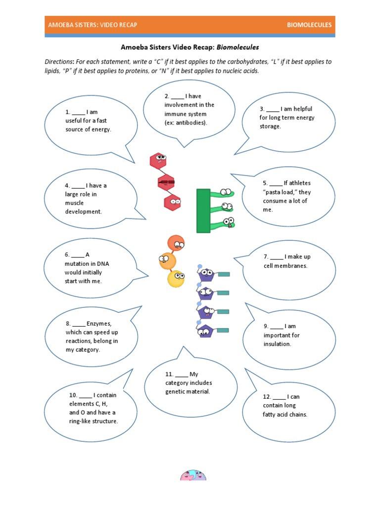 Biological Molecules Worksheet Answers Worksheet Answers Amoeba Sisters Video Recap Biomolecules