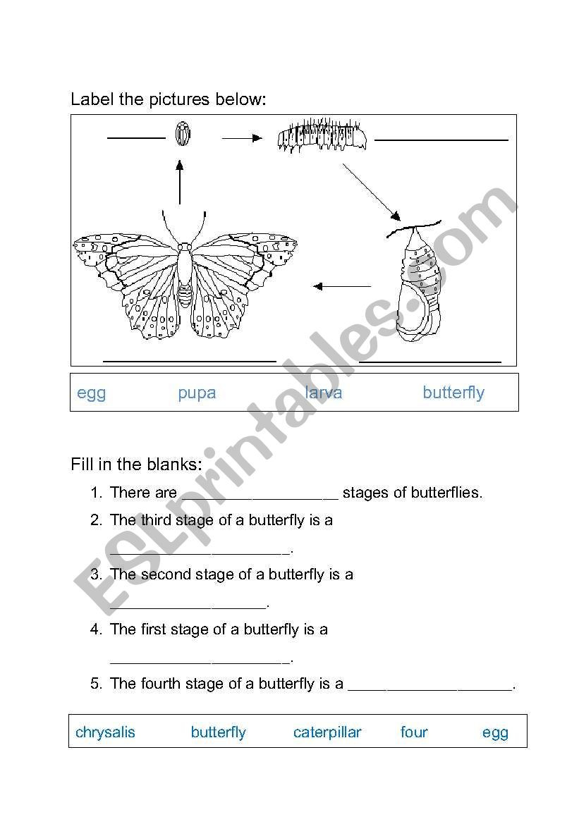 Butterfly Life Cycle Worksheet 2 English Worksheets Life Cycle Of butterfly Worksheet