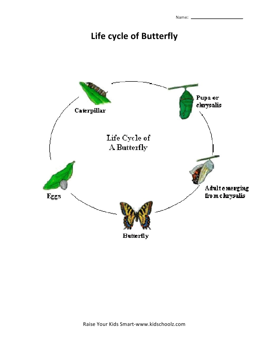 Butterfly Life Cycle Worksheet 2 Grade 2 butterfly Life Cycle Worksheet Kidschoolz