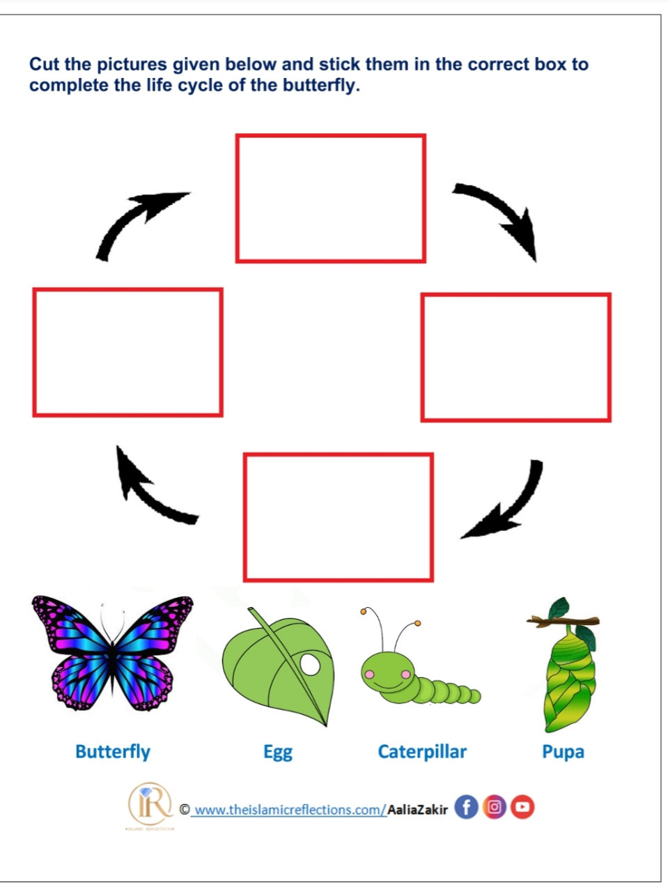 Butterfly Life Cycle Worksheet 2 Life Cycle Of A butterfly islamic Reflections