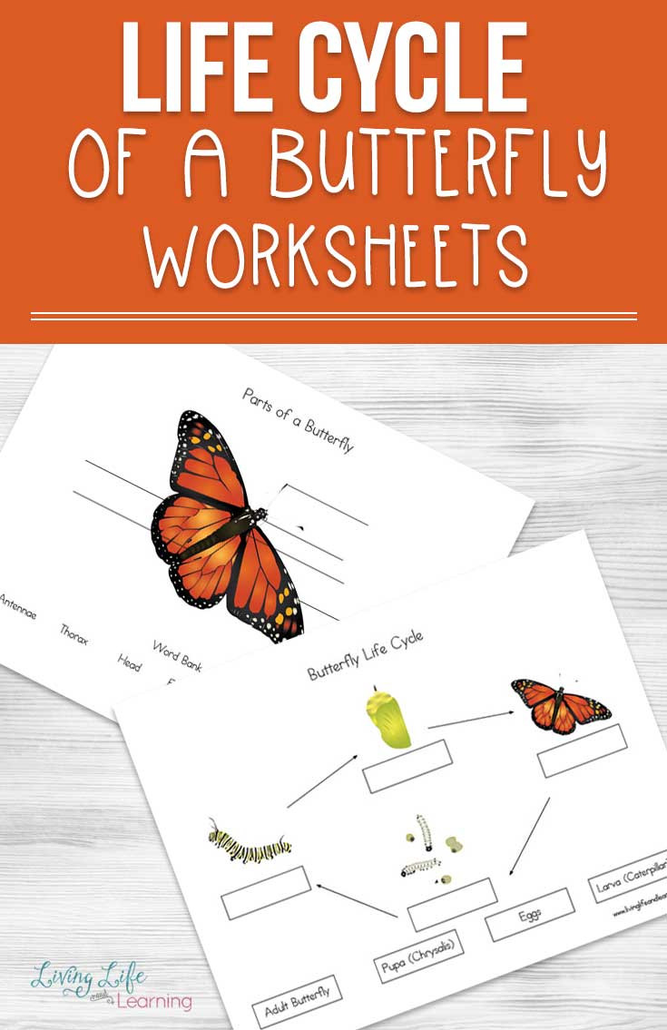 Butterfly Life Cycle Worksheet 2 Life Cycle Of A butterfly Worksheets