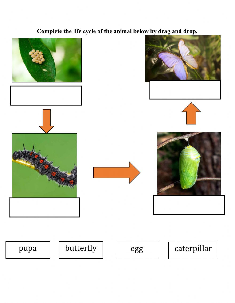 Butterfly Life Cycle Worksheet 2 Life Cycle Of butterfly Interactive Worksheet
